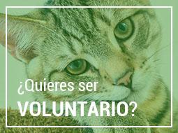 Consulta la Ordenanza sobre tenencia de animales de compañía y animales potencialmente peligrosos